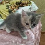 Котята ищут хороших хозяев, Курган