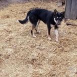 Собака  стерилизованная Альфа, Курган